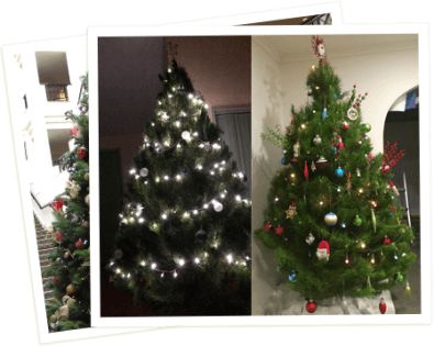 Make all your Christmases come at once, well at least next year's! Send us  a picture of your decorated Santa's Shaped Christmas Tree to be in the  running to ... - Santa's Shaped Christmas Tree Farm €� Real Christmas Trees In The
